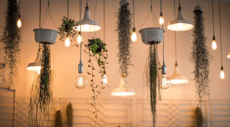 Extremamente 9 plantas para decorar sua casa - Blog Frias Neto CS32